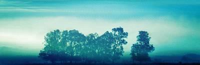 Photograph - Blue Gum Trees by Werner Lehmann