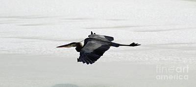 Nirvana - Blue Heron by Kristen Pagliaro
