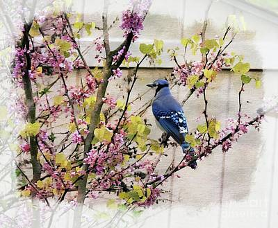 Photograph - Blue Jay by Brenda Bostic