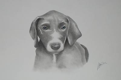 Pitbull Drawing - Blue by Kevin Burden