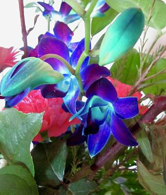 Photograph - Blue Orchids by Stephanie Moore