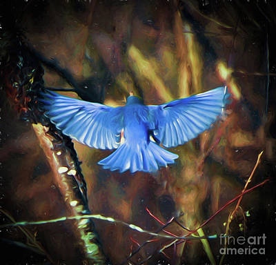 Photograph - Bluebird Wings by Kerri Farley