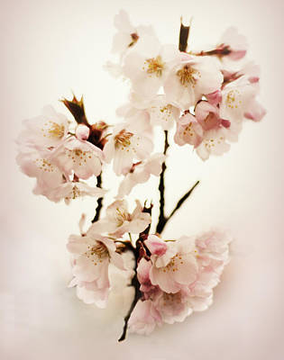 Pear Digital Art - Blush Blossom by Jessica Jenney