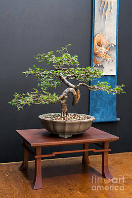 Photograph - Bonsai Art by Kevin McCarthy