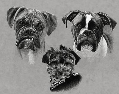 2 Boxers 1 Yorkie Art Print