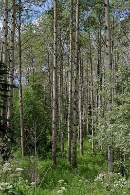 Photograph - British Columbia Forests by Ryan Heffron