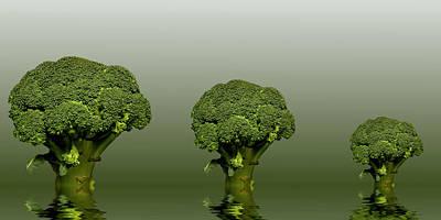 Broccoli Green Veg Art Print by David French