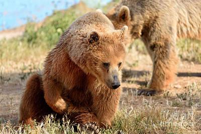 Bears Painting - Brown Bear by George Atsametakis