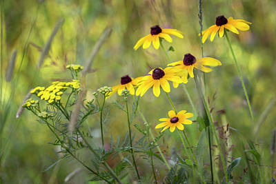 Photograph - Brown Eyed Susans by Angie Rea