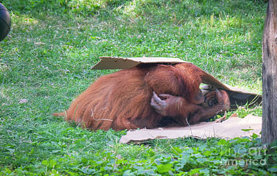 Photograph - Budapest Zoo by Milena Boeva