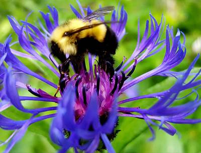 Photograph - Bumble Bee by Tiffany Erdman