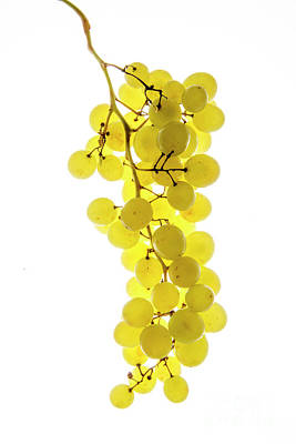 White Grape Photograph - Bunch Of White Grapes by Bernard Jaubert