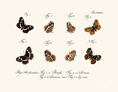 Wings Drawing - Butterflies by German School