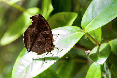 Photograph - Butterfly by David Ortega Baglietto