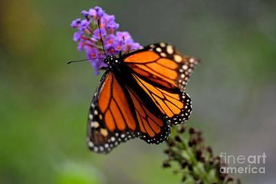 Photograph - Butterfly by Janice Spivey