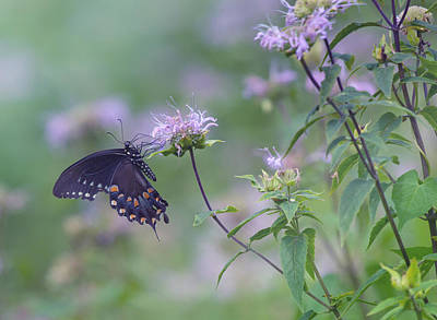 Fluttering Photograph - Butterfly by June Marie Sobrito