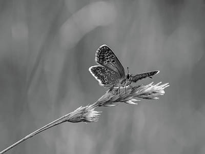 Photograph - Butterfly On Grain by Pixabay
