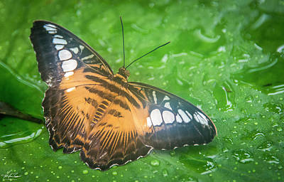 Photograph - Butterfly by Philip Rispin