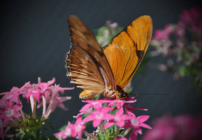 Art Print featuring the photograph Butterfly by Savannah Gibbs
