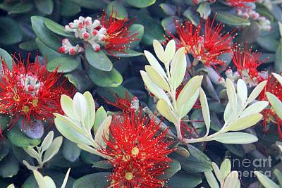 Photograph - California Flowers by Douglas Miller