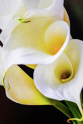 White Flower Photograph - Calla Lily Beauty by Garry Gay