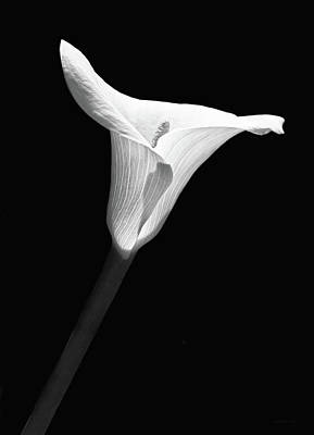 Photograph - Calla Lily Flower Black And White by Jennie Marie Schell