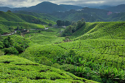 Photograph - Cameron Highlands Tea Plantation by Fabrizio Troiani