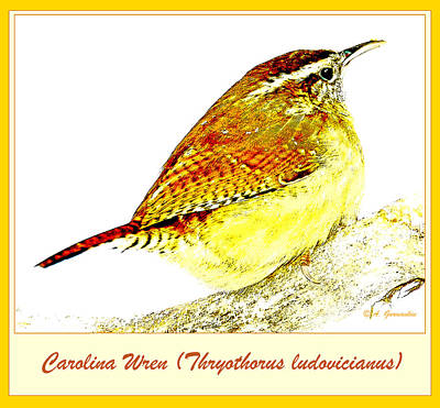 Carolina Wren Animal Portrait Digital Art Art Print by A Gurmankin