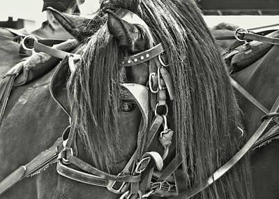 Carriage Horse Beauty Art Print by Dressage Design