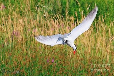 Painting - Caspian Tern by J McCombie