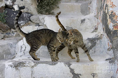 Gray Tabby Photograph - Cat And Her Kitten by Jean-Louis Klein & Marie-Luce Hubert