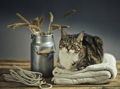 Still Life Royalty-Free and Rights-Managed Images - Cat Portrait by Nailia Schwarz