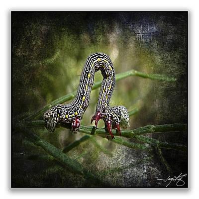 Isolated On Black Background Digital Art - Caterpillar 14 by Ingrid Smith-Johnsen