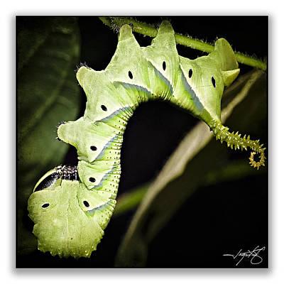Isolated On Black Background Digital Art - Caterpillar 7 by Ingrid Smith-Johnsen