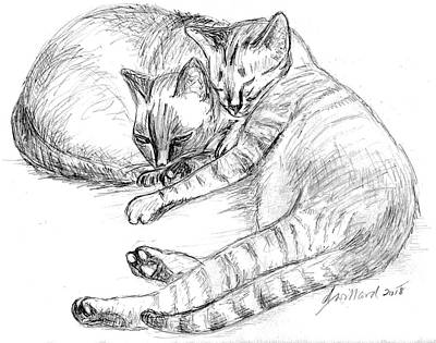 Drawing - 2 Cats Sleeping by Deborah Willard