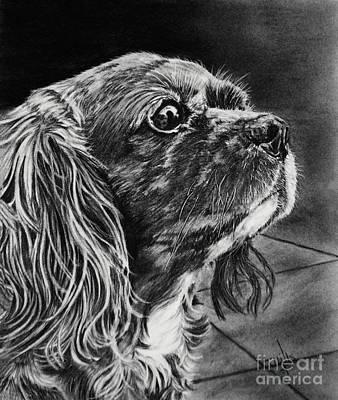 Drawing - Cavalier II by Terri Mills