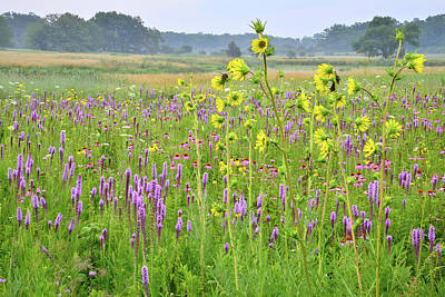 Photograph - Chain-o-lakes Wildflowers by Ray Mathis