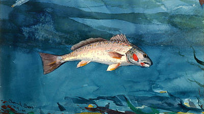 Fish Underwater Painting - Channel Bass by Mountain Dreams
