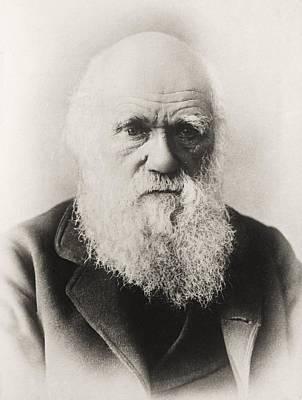 Selection Drawing - Charles Darwin 1809 1882 English by Vintage Design Pics