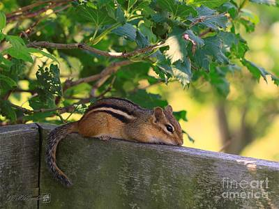 Photograph - Chipmunk Chillin' On The Railin' by J McCombie