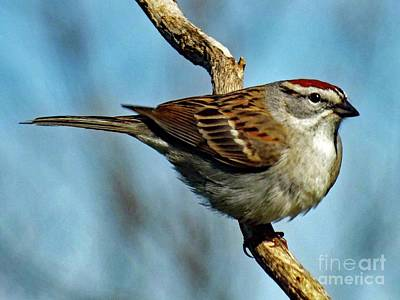 Abstract Sailboats - Chipping Sparrow by Cindy Treger