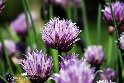 Photograph - Chives by Rick Thiemke