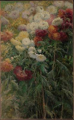 Chrysanthemums In The Garden At Petit-gennevilliers Art Print by Gustave Caillebotte