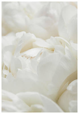 Photograph - Close Up Of Peonies by Lenny Carter