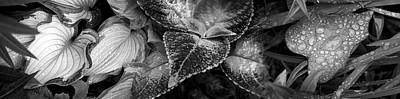 Close-up Of Raindrops On Leaves Art Print by Panoramic Images