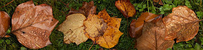 Fallen Leaf Photograph - Close-up Of Wet Leaves by Panoramic Images