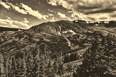 Photograph - Colorado Timberline by L O C