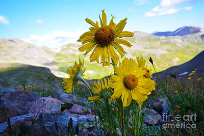 Photograph - Colorado Wildflowers by Kate Avery