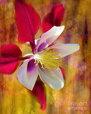 Photograph - Columbine by Judi Bagwell