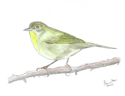 Warbler Mixed Media - Common Yellowthroat by Ronnie Maum